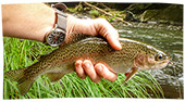 Wheels N Reels // Fly Fishing Nantahala, NC